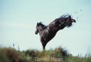 TM_HORSES_011