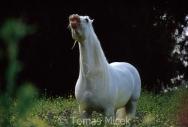 TM_HORSES_012