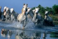 TM_HORSES_014