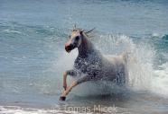 TM_HORSES_017