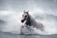 TM_HORSES_018