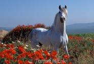 TM_HORSES_020