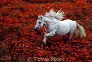 TM_HORSES_021