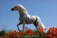 TM_HORSES_022