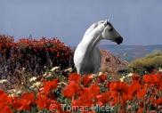 TM_HORSES_023