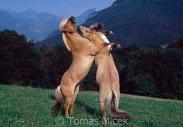 TM_HORSES_026