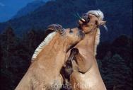 TM_HORSES_027
