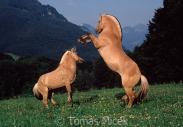TM_HORSES_028