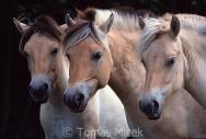 TM_HORSES_030