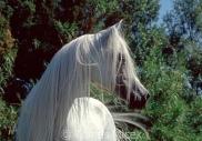 TM_HORSES_031