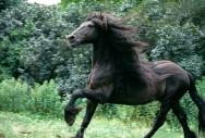TM_HORSES_032