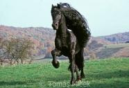 TM_HORSES_033