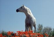 TM_HORSES_034