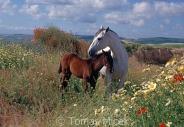 TM_HORSES_035