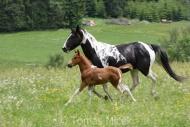 TM_HORSES_036