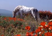 TM_HORSES_037