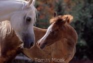 TM_HORSES_038