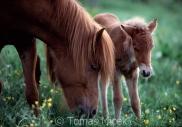 TM_HORSES_039