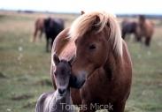 TM_HORSES_040