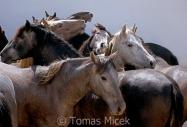 TM_HORSES_043