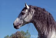 TM_HORSES_044