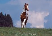 TM_HORSES_045
