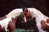TM_HORSES_046