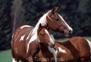 TM_HORSES_047