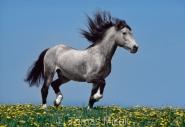TM_HORSES_048