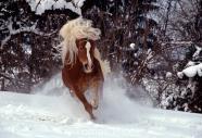 TM_HORSES_049