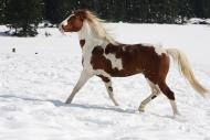 TM_HORSES_050