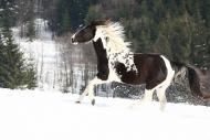 TM_HORSES_051