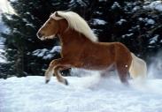 TM_HORSES_052