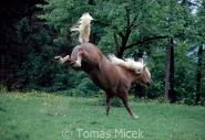 TM_HORSES_053