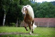 TM_HORSES_054