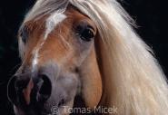 TM_HORSES_056