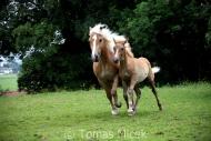 TM_HORSES_057