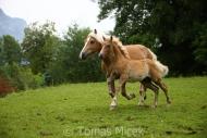 TM_HORSES_058
