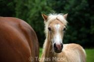 TM_HORSES_059