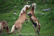 TM_HORSES_060