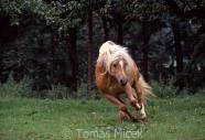 TM_HORSES_061