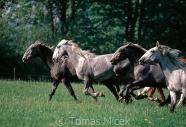 TM_HORSES_063