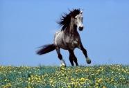 TM_HORSES_064
