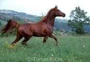 TM_HORSES_066
