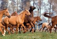 TM_HORSES_067