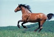 TM_HORSES_068