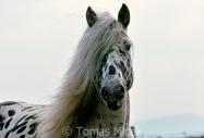 TM_HORSES_069