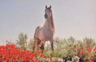HORSES_2_001
