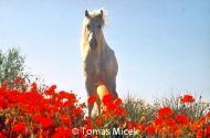 HORSES_2_002
