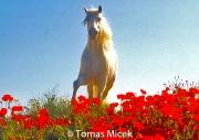 HORSES_2_003